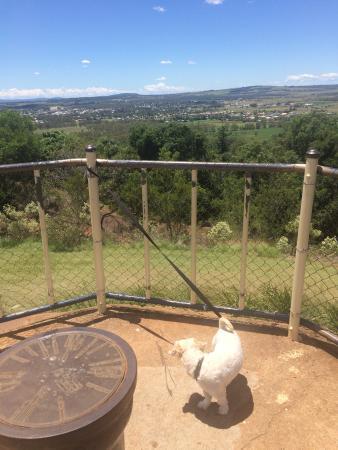 Kingaroy, Australia: Woof