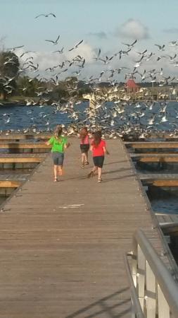 Palatka, FL: 20160202_170321_large.jpg