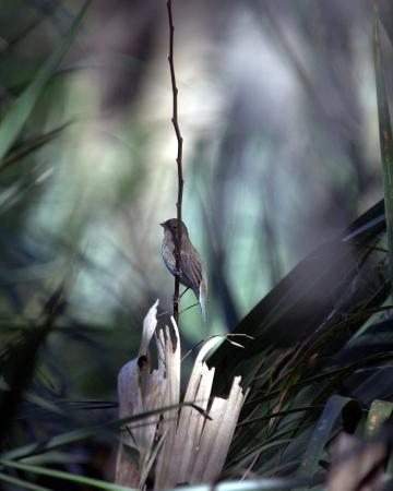 Palmetto, FL: Felts Audubon Preserve