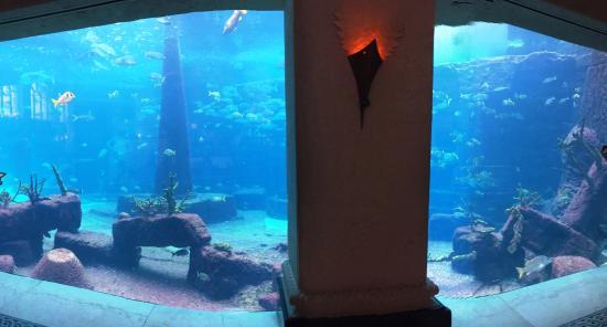 Aquaventure Water Park at Atlantis Paradise Island: The Dig