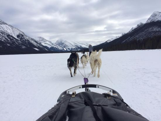 Snowy Owl Sled Dog Tours: Beautiful mountain views!