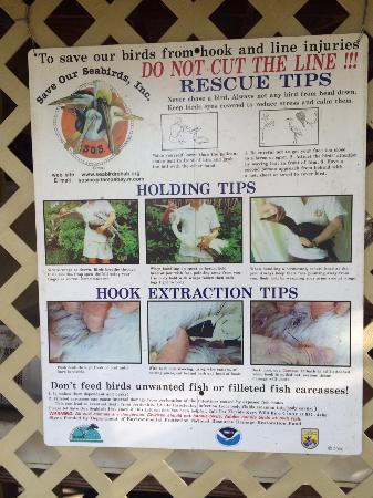 Tavernier, Floride : Hoe vishaken te verwijderen