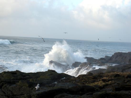 Depoe Bay, OR: Boiler Bay State Park - big waves