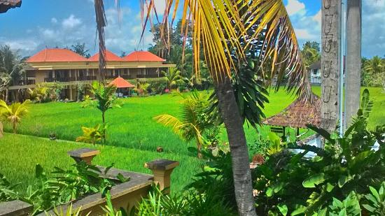 Rice Paddy Bungalows: Good times in Ubud! The view from our balcony. Very amazing and peaceful.