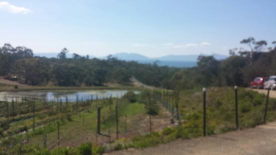 Swansea, Avustralya: Kates Berry Farm