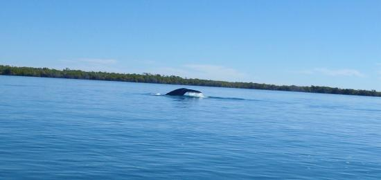Puerto San Carlos, México: Whale tail