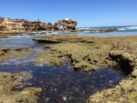 Mornington Peninsula, أستراليا: Rock jumpers to the left of the rock hole