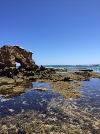 Mornington Peninsula, أستراليا: Sea life