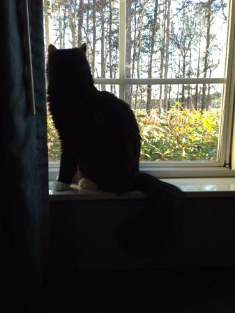 Microtel Inn & Suites by Wyndham Bremen: Cat TV