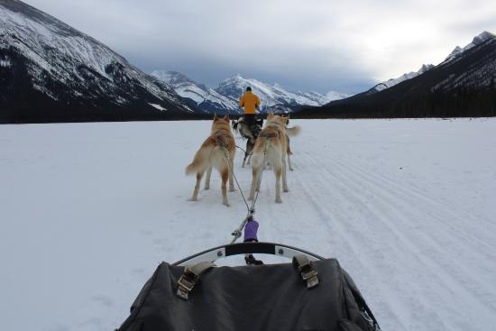 Snowy Owl Sled Dog Tours: Such a lovely view!