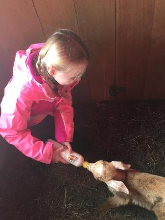 Cold Moon Farm Bed & Breakfast LLC: Feeding baby goats