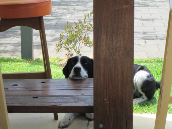 Strathalbyn, Australia: The very friendly house dog