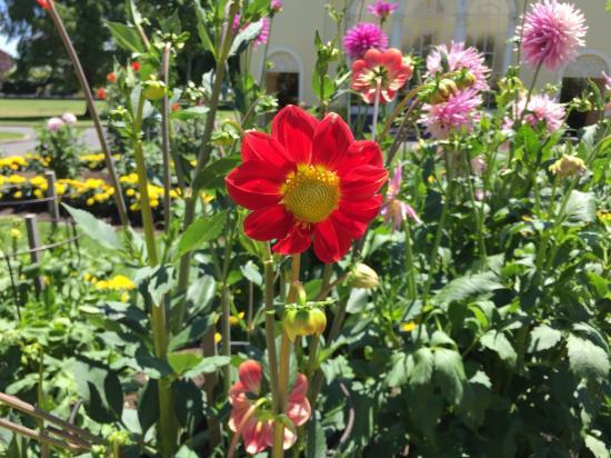 Launceston, Australia: City Park - Flowers