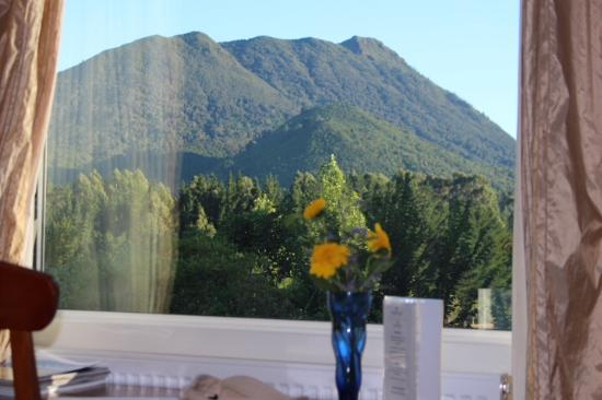 Kauri Point: View from bed