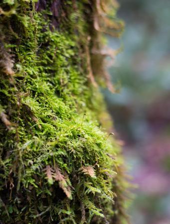 เบนบริดจ์ไอแลนด์, วอชิงตัน: Bloedel Reserve Trail