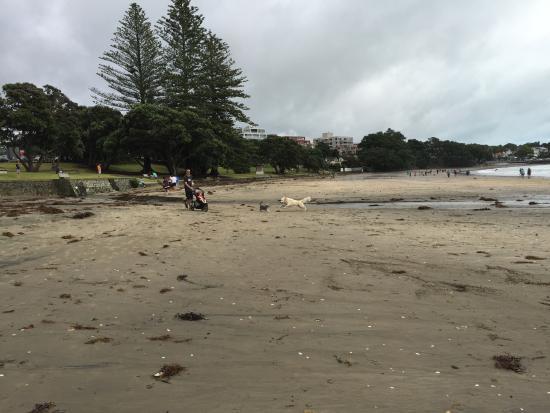 Beaches Near Takapuna