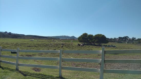 Foto de Mission Ranch