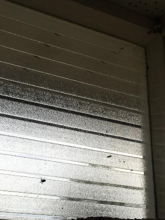 Motueka Garden Motel: Fenster voller Spinnweben