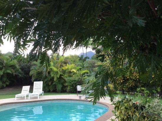 Papaya Paradise Bed and Breakfast: Blick zum Pool  u. In den Garten