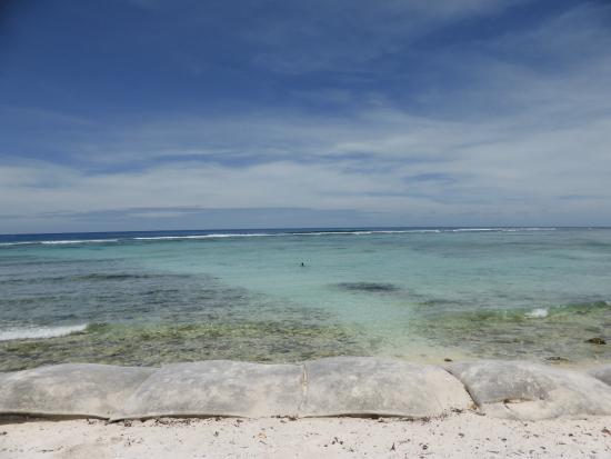 Island Trannies 15