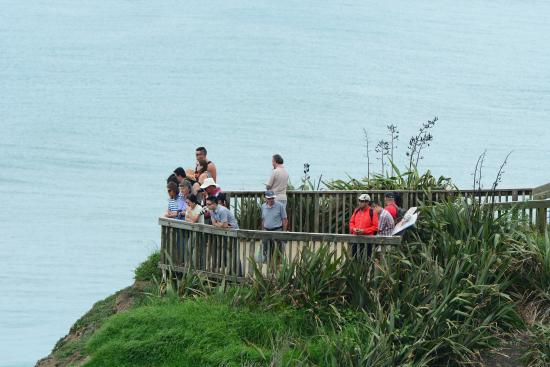 Muriwai Beach, Nueva Zelanda: photo4.jpg