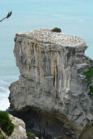 Muriwai Beach, Nova Zelândia: photo9.jpg