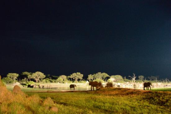 Hwange National Park, Zimbabwe: The waterhole from The Hide