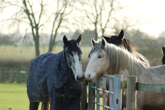 Bransby Horses: Over the fence kisses