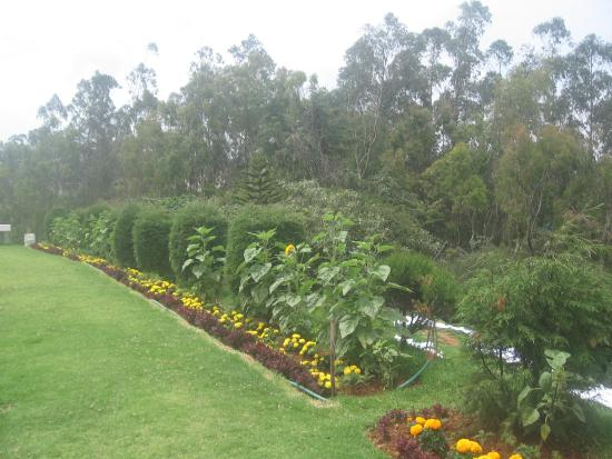 The Monarch Ooty: Garden with nice flowers