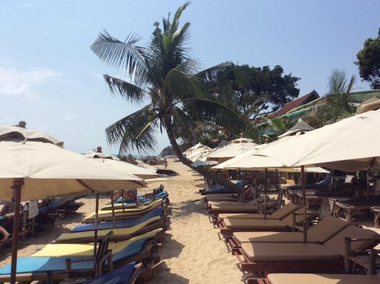 lamai beach au baobab picture of ko samui surat thani province rh tripadvisor com