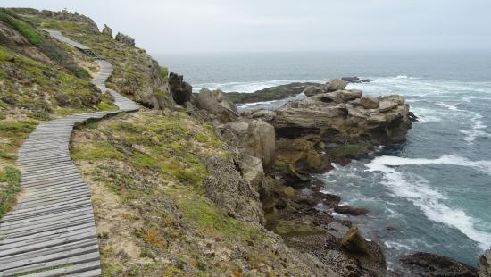 Plettenberg Bay, Republika Południowej Afryki: chemin de bois pour respecter pour la nature
