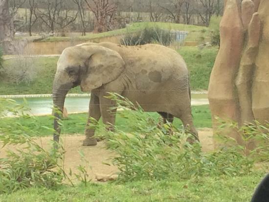 picture of zoo african safari plaisance du touch tripadvisor. Black Bedroom Furniture Sets. Home Design Ideas