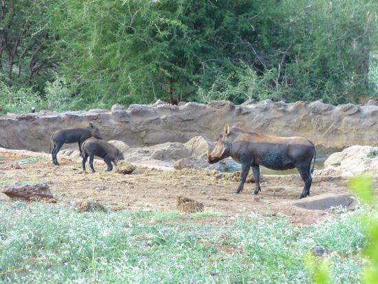 Rhulani Safari Lodge: Blick vom Haupthaus auf das Wasserloch