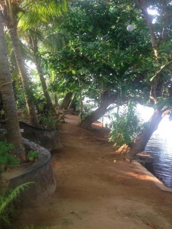 Chendamangalam, Hindistan: The Path Beside the River where infront of the bungalows