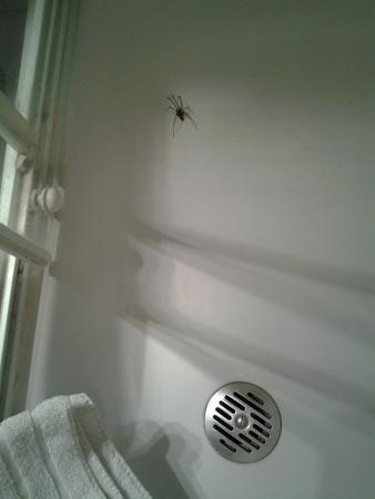 Anderlecht, เบลเยียม: Araignée 1er jour.Tuée par le propre concierge...