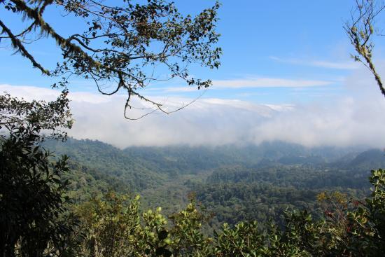 Sendero Los Quetzales (The Quetzales Trail): Mirador