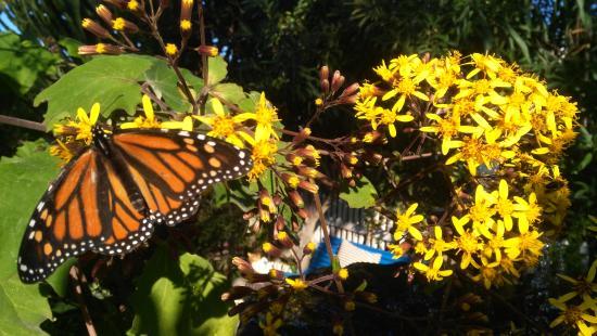 Cortijo Nuevo: Relax in flower-filled gardens
