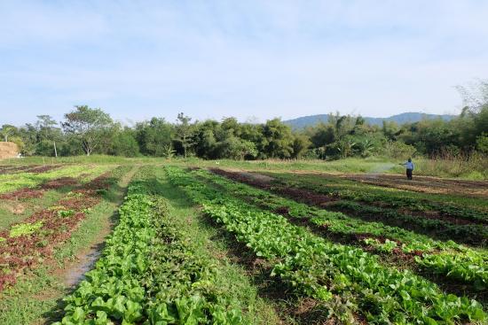 Wang Nam Khiao, Thái Lan: สวนลุงไกร