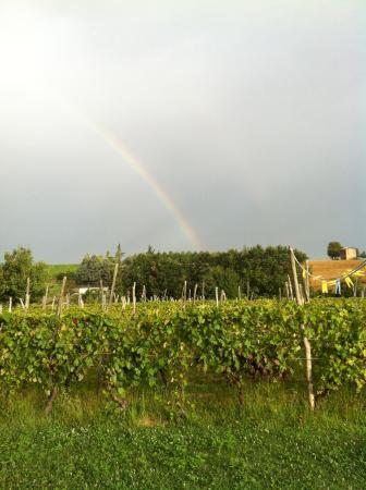 Rocca Grimalda, Italië: arcobaleno su Cascina la Maddalena Bed & Wine