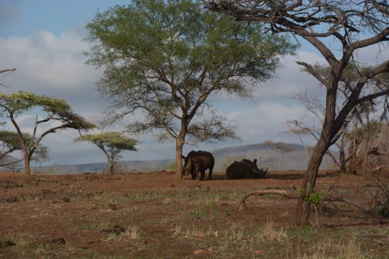 Mkuze Falls game reserve : More Rhinos