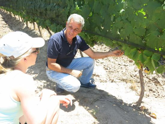 Bodega Hacienda del Plata : Pablo showing us his vines and explaining more about Malbec