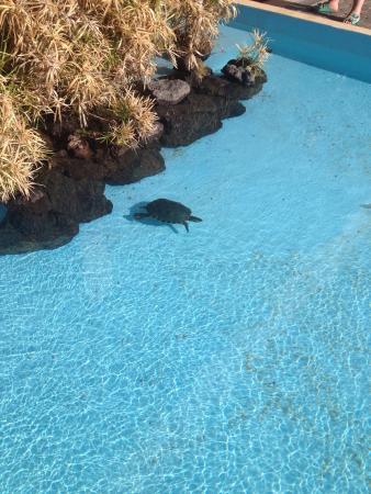 Hotel Coronas Playa: photo2.jpg