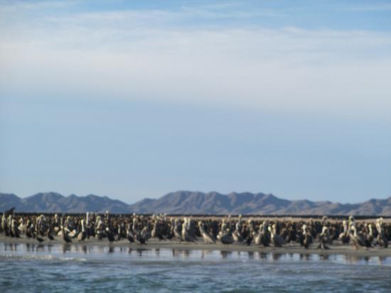Puerto San Carlos, México: bird island