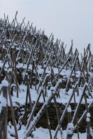Hotel Le Domaine des Vignes : vignes sous la neige