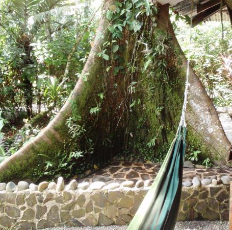 Manzanillo, Costa Rica : Outdoor shower in tree
