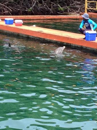 Road Town, Tortola: The dolphin tank and trainer