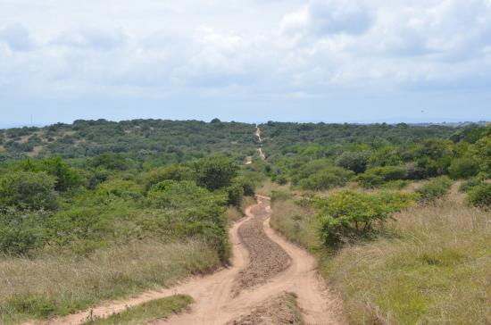 Amakhala Game Reserve, Sudáfrica: Everything was amazing! What a great day!