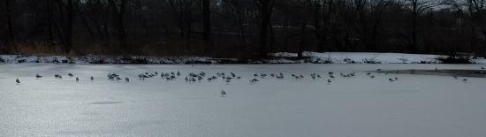 Piscataway, NJ : The park is beautiful even in winter