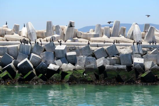 Robben Eiland  Picture Of Robben Island Cape Town Central  TripAdvisor