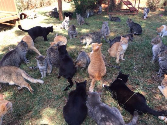 Lanai City, هاواي: Kitties waiting for treats